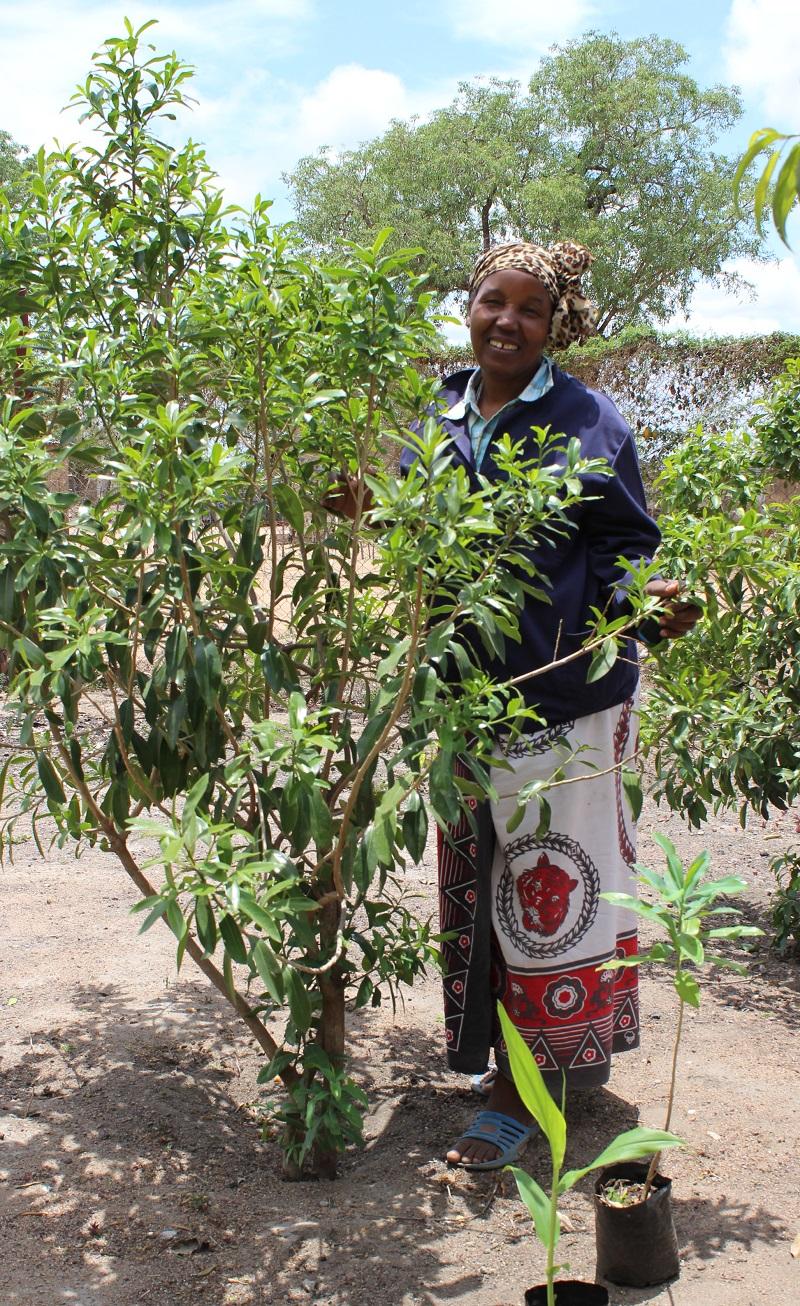 kukula_pepperbark-_2yr-tree-800w